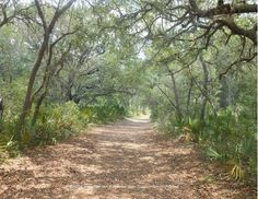 Tree lined trails at Jay B. Starkey Wilderness Park in New Port Richey, Florida Florida Springs, Florida Beaches, Florida Vacation, Florida Travel, Beautiful Park, Beautiful Beaches, New Port Richey Florida, Tampa Bay Area, Vacation Destinations