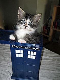 Dr. Who kitteh!