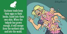 Zoogdieren. De bevalling of geboorte bij de mens is de gebeurtenis waarbij een foetus vanuit de baarmoeder van de vrouw door het geboortekanaal naar buiten komt als baby. Iedereen kan zich wel voorstellen hoe zoiets in z'n werk gaat. In het dierenrijk bevallen sommige zoogdieren op hun specifieke eigen manier. Maar stel je nu eens