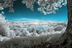 目が覚めるような色のコントラストが美し過ぎるカラフルな赤外線写真12選 | IRORIO(イロリオ) - 海外ニュース・国内ニュースで井戸端会議