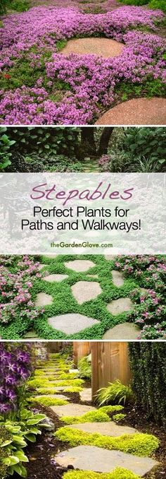 Backyard Garden Inspiration Stepables: Cool ideas for plants and ground cover for your Paths and Walkways!Backyard Garden Inspiration Stepables: Cool ideas for plants and ground cover for your Paths and Walkways! Lawn And Garden, Garden Paths, Garden Landscaping, Landscaping Ideas, Walkway Ideas, Path Ideas, Walkway Garden, Hill Garden, Easy Garden