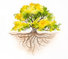 oak tree drawing with roots - Google Search