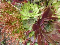 Xeria E-Zine is the online magazine for xeriscaping information, news about succulents, and tips for making your garden fabulous, even without much water.  Don't miss links to new pages, alerts for my e-courses, and much more.