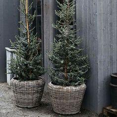 ~Christmas Gray~