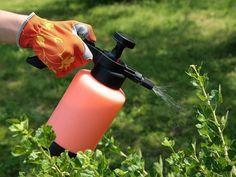El peróxido de hidrógeno o agua oxigenada como se la conoce vulgarmente es un producto que por sus peculiaridades puede usarse en el jardín. Sus moléculas (H2O2) cuentan con un átomo más de oxígeno que el agua(H2O). Este átomo de oxígeno es bastante inestable y es liberado con facilidad con lo cual podemos usar el peróxido de hidrógeno para tareas en las que precisemos un mayor aporte de oxígeno- 3%=10 VOL.
