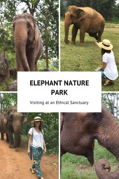 ELEPHANT NATURE PARK  Elephant | Sanctuary | Chiang Mai | Thailand | Southeast Asia | Ethical Sanctuary