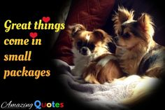 Chihuahua's – The Truth You Should Know