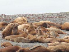 lion sea
