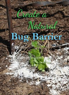 Create a Natural Bug Barrier