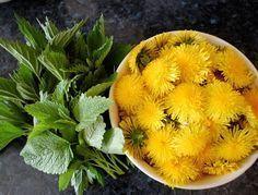 Pampeliško-kopřivový sirup s meduňkou | Ze zahrady do kuchyně Healing Herbs, Medicinal Herbs, Happy Vegan, Home Bakery, Home Canning, Sweet Desserts, Natural Medicine, Organic Beauty, Healthy Drinks