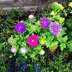 Flowers blooming. September bliss.