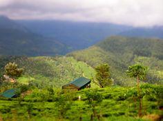 Madulkelle tea and eco lodge.