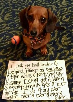 And I thought it was just my dachshund. Funny Dachshund, Mini Dachshund, Funny Dogs, Funny Animals, Cute Animals, Daschund, Dachshund Quotes, Dachshund Puppies, I Love Dogs