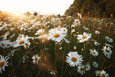 Join me on Pinterest at @patriciahmann  @  #flowers