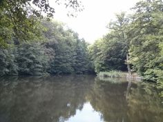 Etang Marie -  Forêt de Montmorency - Août 2013