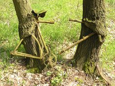 Bicycle being reclaimed by two trees in a cherry orchard at Görsbach in Thuringia, Germay