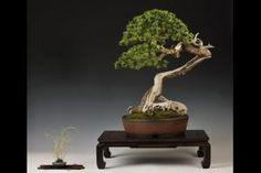 An international exhibition of bonsai and suiseki | Plzen 2015
