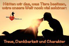 Hätten wir das, was Tiere besitzen, wäre unsere Welt noch viel schöner: Treue, Dankbarkeit und Charakter >> http://www.ich-liebe-tiere.com/ <<