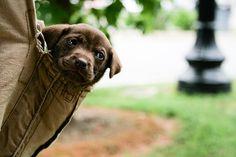 puppy in a pocket