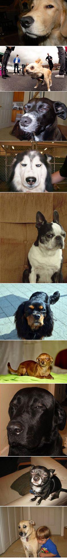 suspicious dogs