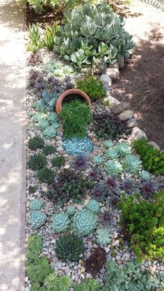 This 'hen and chicks' vertical garden with succulents do not need water to thrive. They can survive in critical heat conditions. 30 Low-water Landscaping Ideas For Your Garden - Water free landscape garden ideas Low Water Landscaping, Courtyard Landscaping, Succulent Landscaping, Front Yard Landscaping, Succulents Garden, Backyard Landscaping, Landscaping Ideas, Backyard Layout, Succulent Rock Garden