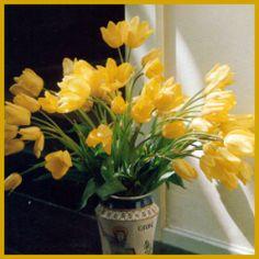 Tulpen, (Tulipa) gibt es in unzähligen verschiedenen Sorten.  Wer #Tulpen liebt – und Tulpenliebhaber gibt es eine ganze Menge -, der hat viel zu tun, denn von diesen #Frühlingsblumen gibt es unzählige  http://www.gartenschlumpf.de/tulpen/