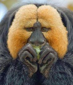 BELEZA ANIMAL - Hair Style He he he he he!