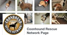 Coonhound Rescue Network = Facebook Community Rescuing Coonhounds & Foxhounds across the USA and Canada