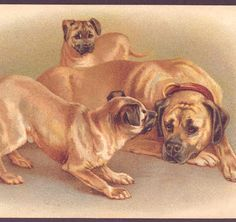 PLAYFUL GREAT DANE DOG,PUPPY WITH MOTHER,DOROTHY POPE,CHROMOLITHOGRAPH POSTCARD