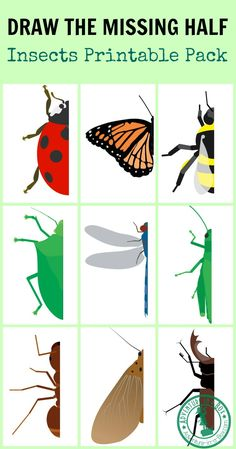 Insect Drawing Prompt: With this free printable, challenge your kids to draw the missing half of an insect. Great for studying entomology, symmetry and developing pre-writing skills! - Draw the Missing Half: Insects Insect Crafts, Insect Art, Insect Activities, Science Activities, Symmetry Activities, Art For Kids, Crafts For Kids, Material Didático, Drawing Prompt