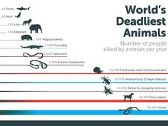 The most deadly animals. Bill Gates Mind-Blowing Infographic Mosquitoes - Business Insider
