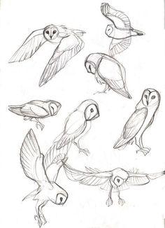 40 kostenlose und einfache Tierskizze, Ideen und Inspiration beim Zeichnen - Drawing Tips easy animals to draw Drawing Poses, Drawing Tips, Drawing Reference, Drawing Ideas, Sketching Tips, Bird Drawings, Easy Drawings, Simple Animal Drawings, Animal Sketches Easy
