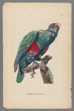Parrots  -  Monographie der Papageien oder, Vollstandige Naturgeschichte aller bis jetzt bekannten Papageien mit getreuen und ausgemalten Abbildungen / im Vereine mit andern Naturforschern herausgegeben von Chr. L. Brehm. 1842-1855