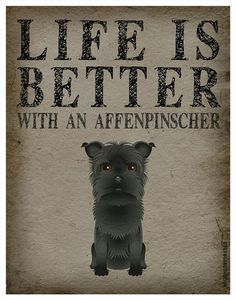 Life is Better with a Affenpinscher Art Print by DogsIncorporated, $29.00 Oh my! This looks just like my Bourbon. This is the ancestor breed for the Schnauzer. So cute!