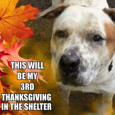 "PLEASE SHARE TO HELP ""BARLEY"" FIND A HOME! THIS WILL BE MY 3 RD THANKSGIVING IN THE SHELTER. BARLEY'S PAGE...PLEASE LIKE...PLEASE SHARE. https://www.fac... - Tina Behla - Google+"