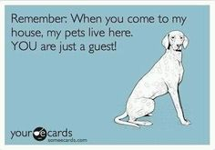 This is for everyone who complains about my bulldog's breathing/shedding/slobbering/constant bids for affection.