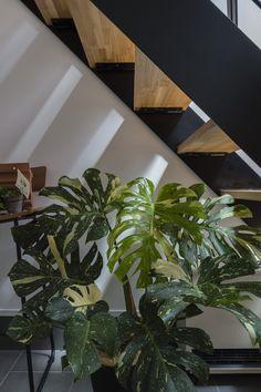 Plant Leaves, Plants, Design, Plant, Planets