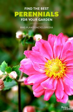 Perennials Find the perfect perennials for your garden in BHG's Plant Encyclopedia.