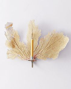Make your own sea fan candle sconce--so easy (I'd spraypaint the sea fan a metallic or bold color).