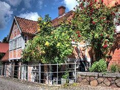 Tolle Rosen vor einem Fachwerkhaus im Hohlen Weg in der Lauenburger Altstadt.