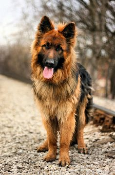 5 Most Popular Dog Breeds in the USA