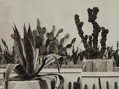 Two black and white photographs, Wiener Werkstätte - by Auctionata AG