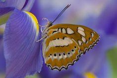 Darrel Gulin Photography | Gallery | Butterflies IV