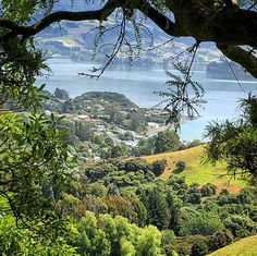Latest Stories, Short Stories, Flash Fiction Stories, Dunedin New Zealand, Quick Reads, Portobello, Landscape Photography, Beautiful Places, Author