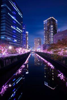 Sakura at Meguro river, Tokyo, Japan