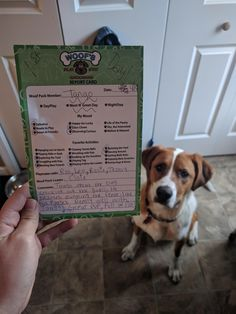 "My boy passed his first day of doggy daycare! Even with being ""talkative"" to put it nicely :) Dog Grooming Salons, Dog Grooming Business, Cat Empire, Pet Hotel, Pet Boarding, Pet Clinic, Cute Hamsters, Dog Crafts, Dog Daycare"