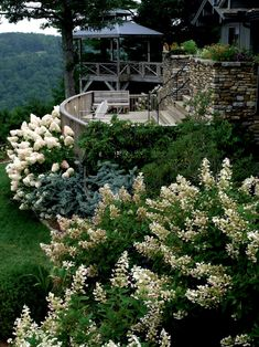 This Rustic Multi Tier Deck, With Stacked Stone Walls, Is Surrounded By  White Tardiva And Limelight Hydrangeas. The Deciduous Shrubs Are Perfect As  Hedges, ...