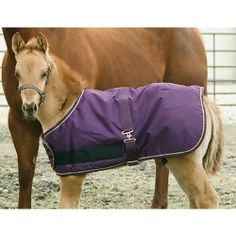"Kensington KPP Foal Turnout Blanket, Plum, 28-Inch to 42-Inch by Kensington. $53.05. Give your foal protection and room to grow in this waterproof, adjustable, breathable turnout blanket, featuring 600 Denier Ripstop Teflon outer shell, 120g of hollow fiberfill and hook and loop fasteners to adjust for growth. Also features 2"" single surcingle strap, snaps and D's for easy fastening, and loop at rear with tail cord. Size Adjustable 28"" – 42"""