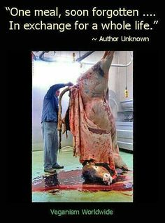 Not nice to see...then why eat it?  #GoVegan