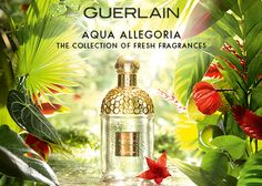 Aqua Allegoria Nature is an emotionally-charged setting where we gather treasures, which inspires and enfolds us.  Every year, when springtime comes, the Guerlain perfumer conjures up gardens filled with scents, in a blend of allegory and exhilaration.  Each one individual. Each one with its own distinct personality and aura.  Sometimes lasting no longer than a season, but always desirable, the Guerlain Aqua Allegoria are all part of an ongoing collection, mirroring the renewal of nature.